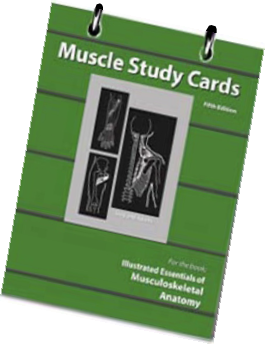 Study Cards